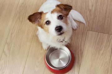 4 Reasons why your Pet Deserves Oven-Baked Pet Food (and not the Extruded Kind)