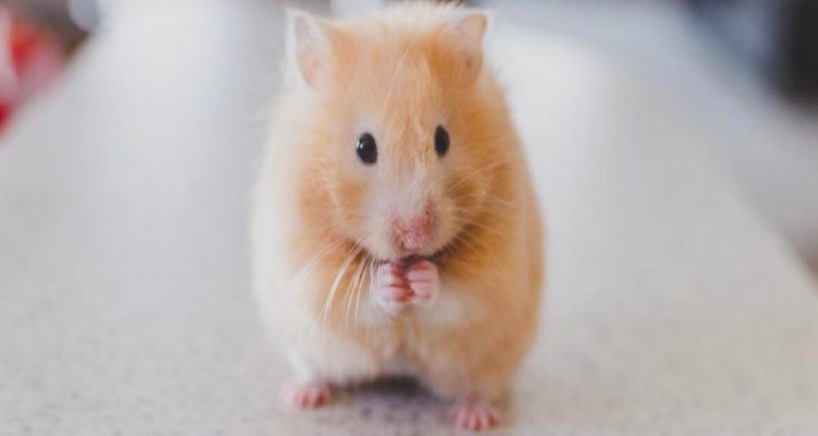 5 Facts You Never Knew About Caring For Hamsters