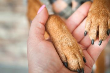 5 HDB-Approved Dog Breeds That Provide Great Emotional Support