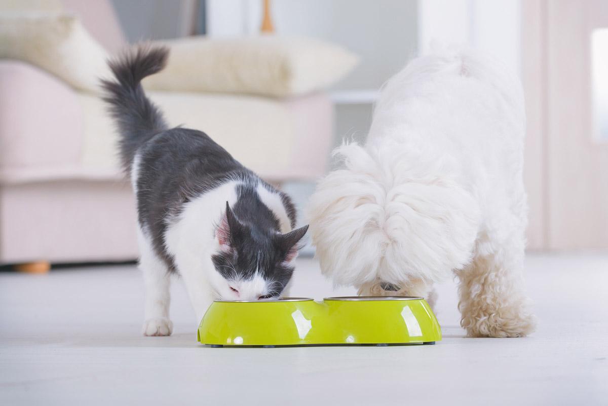 5 Myths About Pet Kibbles, Debunked
