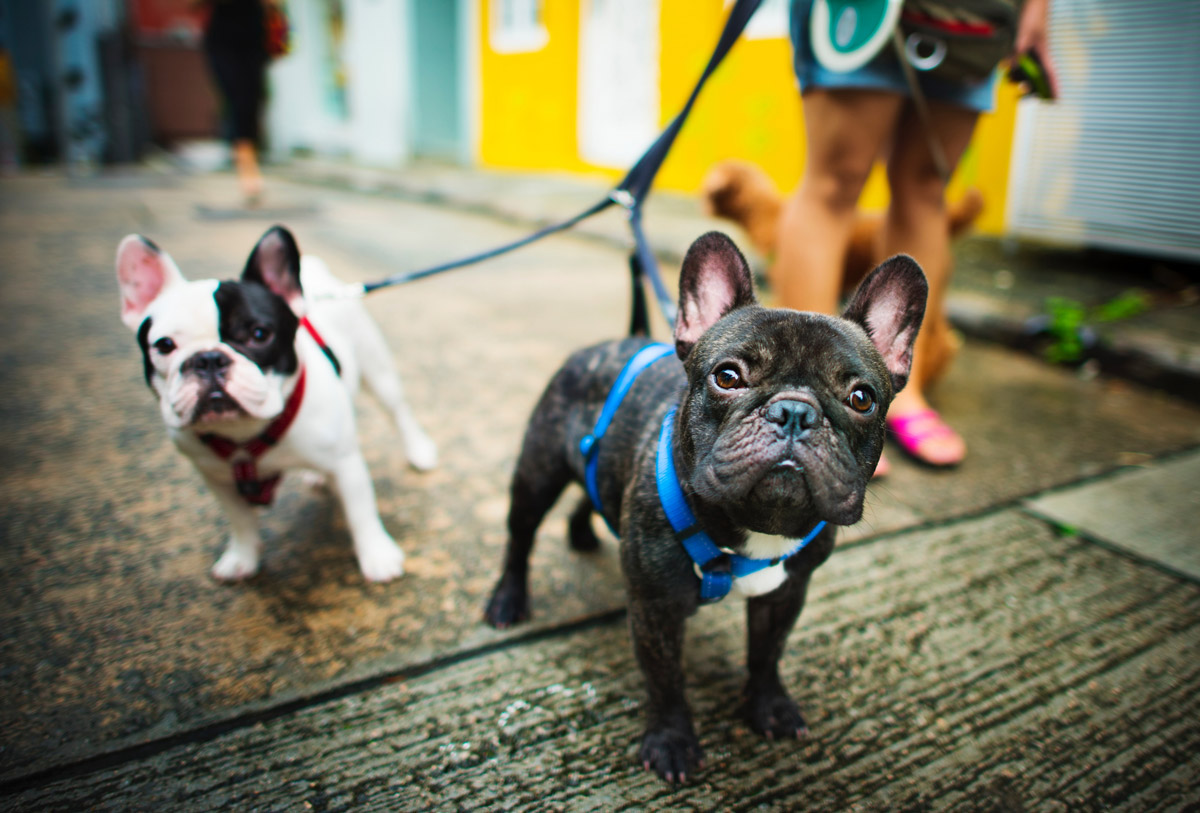 How to Choose the Right Leash for Your Dog?