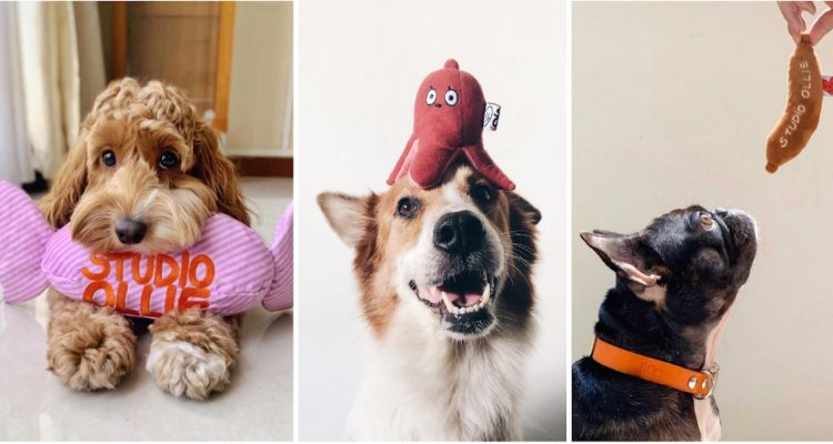 The Importance of Nose Work Toys from Woof Living & Why Your Dog Needs One
