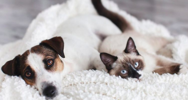 The True Meaning Behind Pet Behaviours Commonly Misunderstood