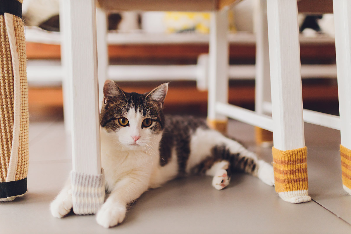 5 Different Types of Personalities Your Cat Might Have