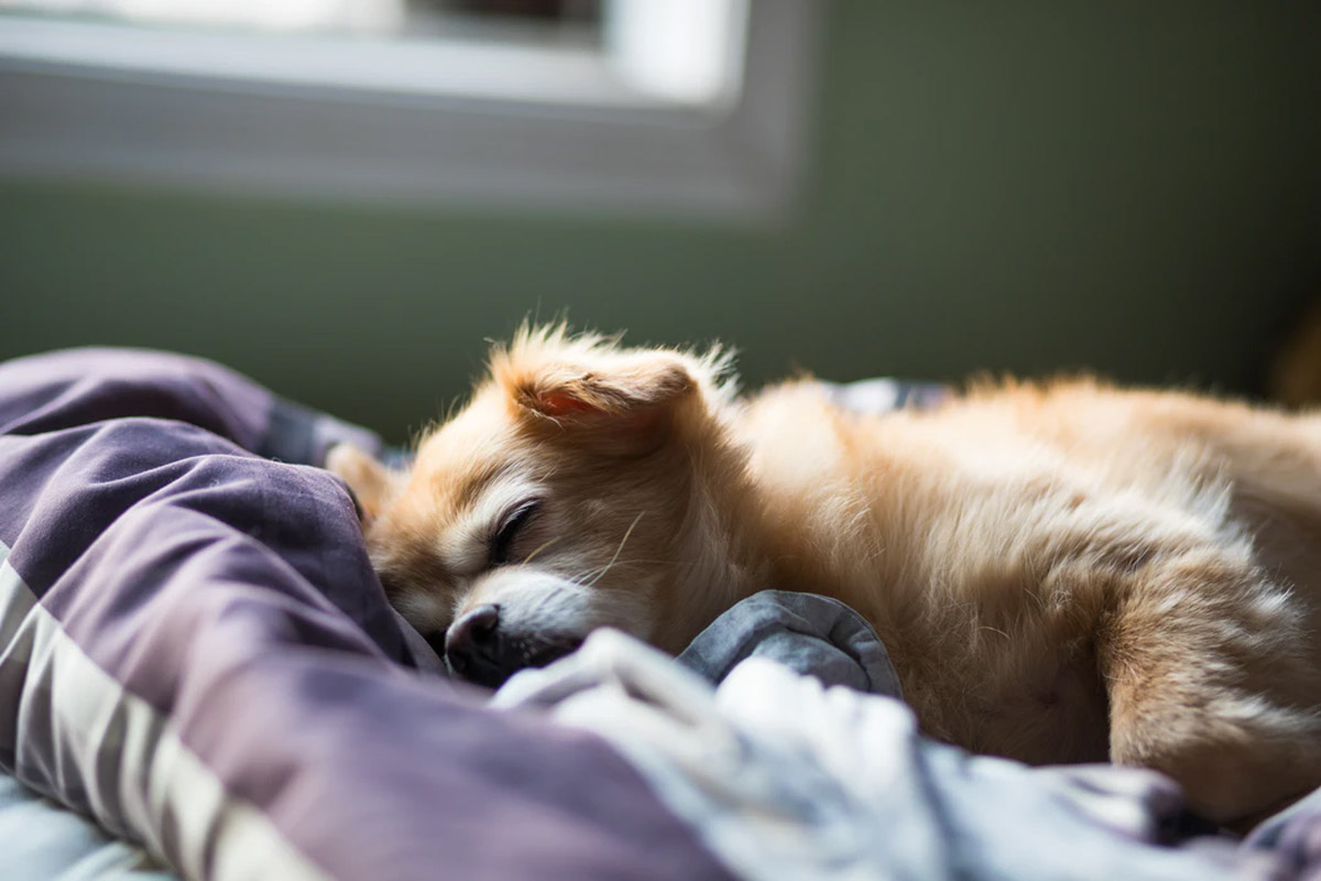 Are You Caring for Your Dog & Cat's Joints Properly?