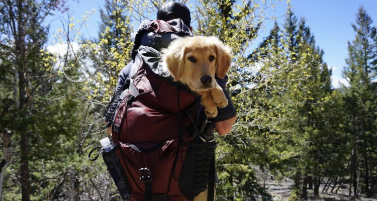 It's Boarding Time: The Complete Packing Guide For Your Dog