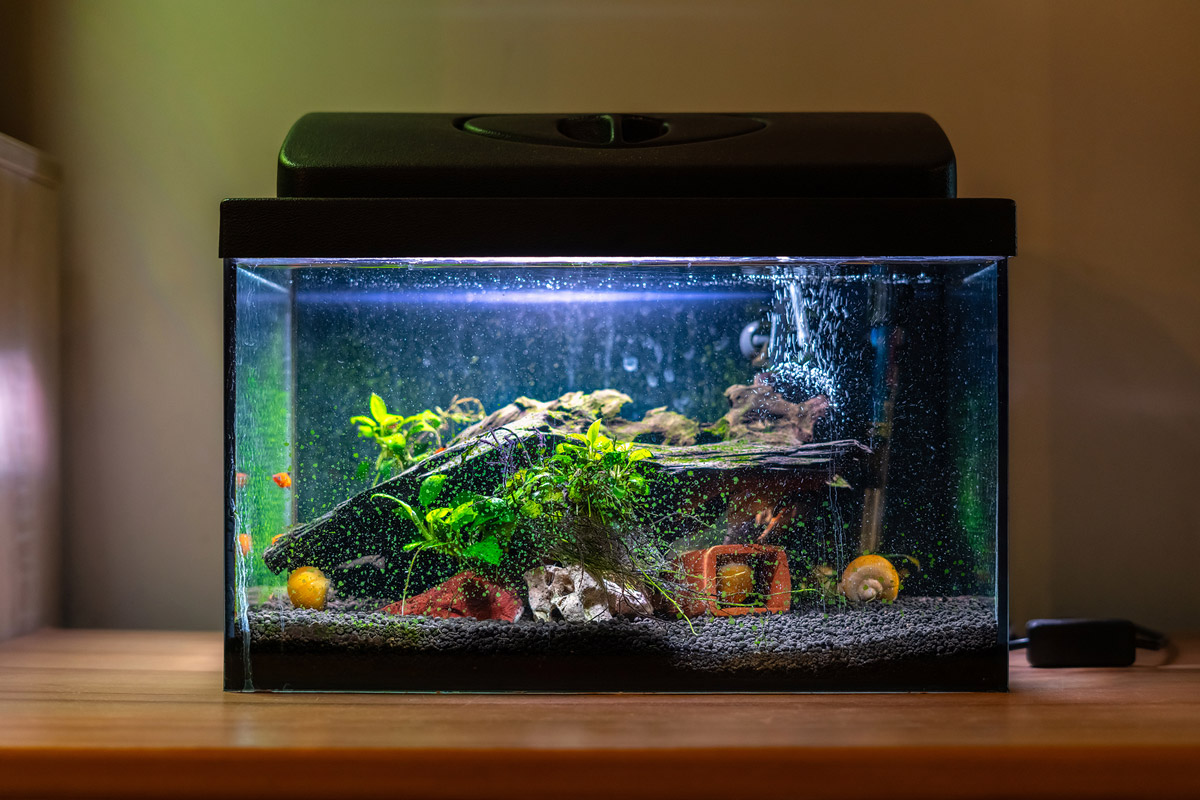 The Beginner's Guide to Growing an Amazing Aquarium