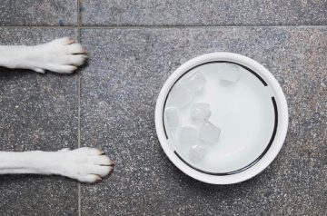 8 Ways to Keep Your Pet Cool In Hot, Humid Weather
