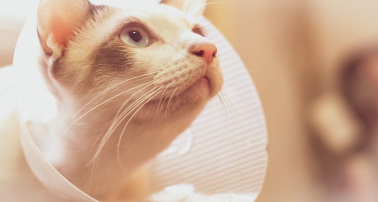 Post-surgery Care: 9 Tips for Looking After Your Cat or Dog