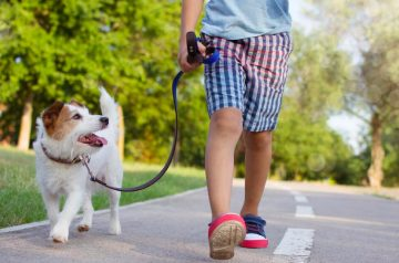 Common Q&As About Cleaning Your Dog After A Walk During A Pandemic