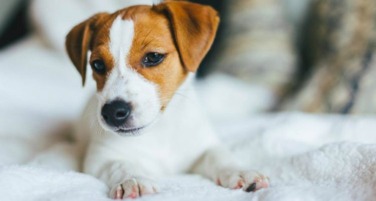 Heartworm Disease in Cats & Dogs: Causes, Signs & Dangers of this Silent Killer