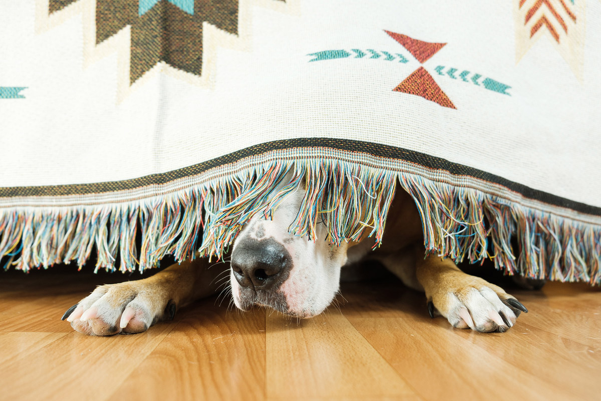 How Should You Prepare for Dementia in Dogs?