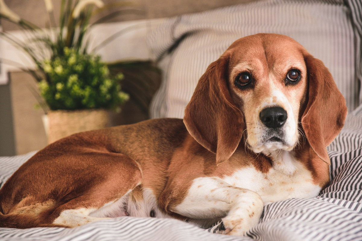 Post-surgery Care: 5 Tips for Looking After Your Dog