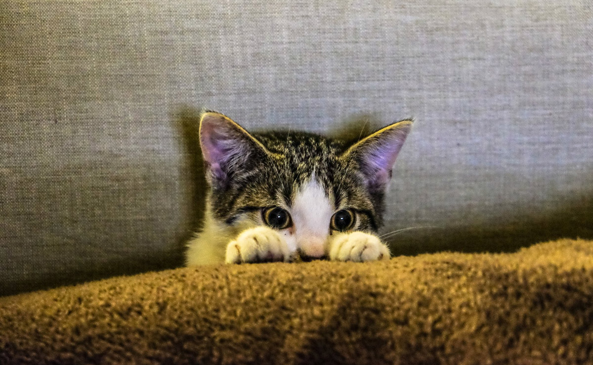 4 Ways to Make Your Cat More Affectionate Towards You