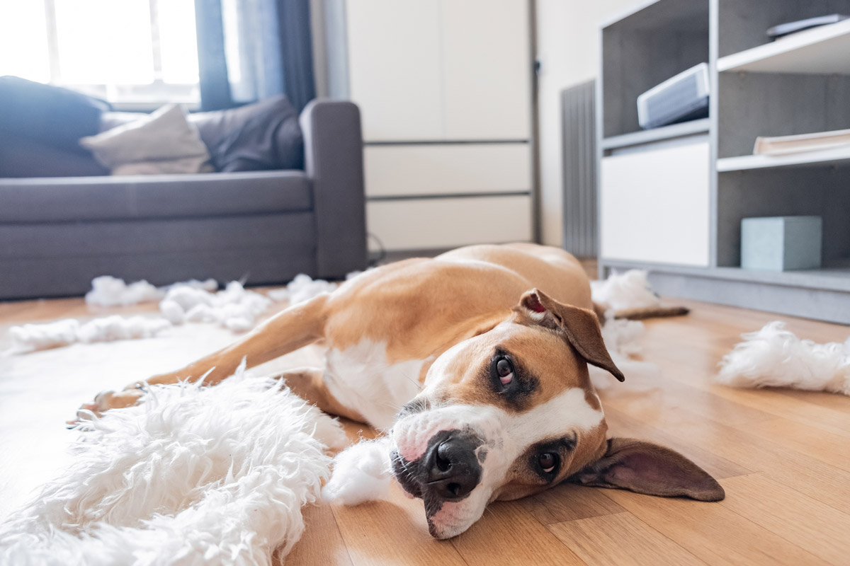 A Guide on How to Deal with Dogs Destroying House Furniture