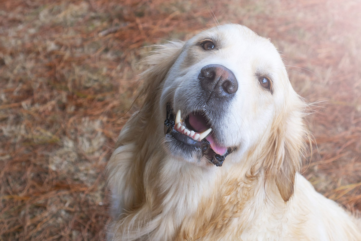 Lymphoma in Dogs: Causes, Symptoms & Treatment Options