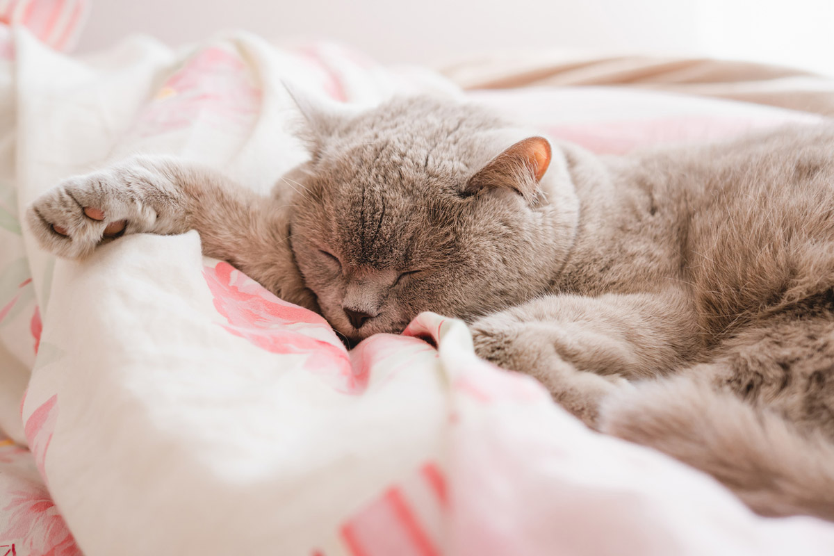 6 Common Infections You Can Catch From Your Pets