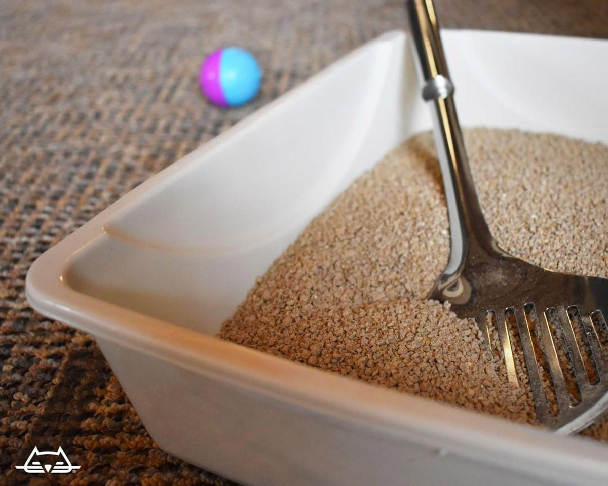 Potential Health Dangers Caused By Cat Litter
