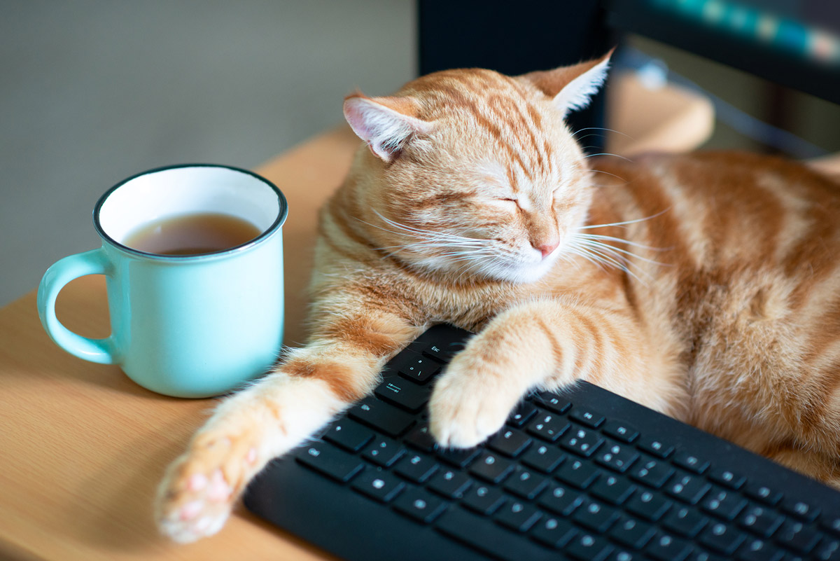 Telehealth in Vet Clinics: Benefits & Where to Find in Singapore