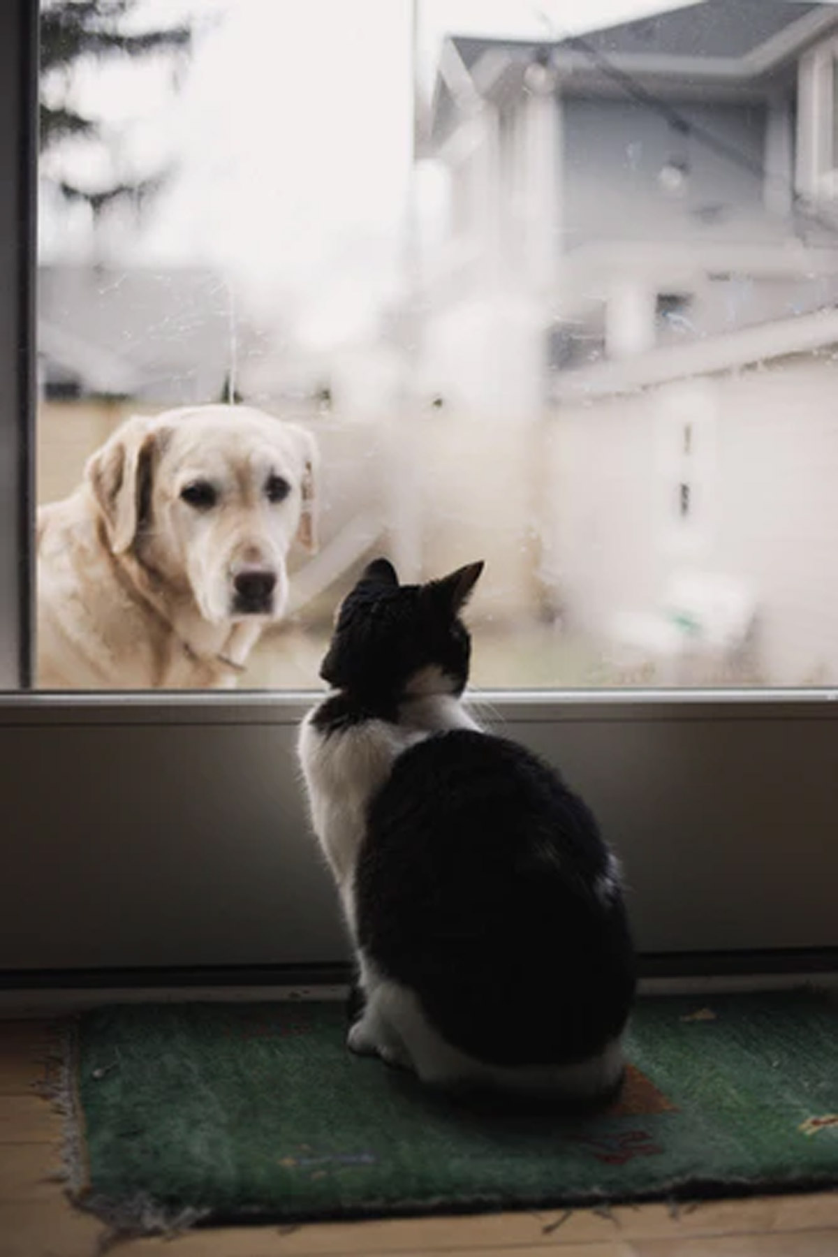 A Guide to Introducing a New Cat to Your Dogs