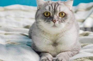 Can You Train Your Cat to Sleep Through the Night?