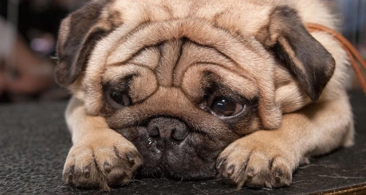 4 Reasons Why You Should Test Your Canine For Diabetes