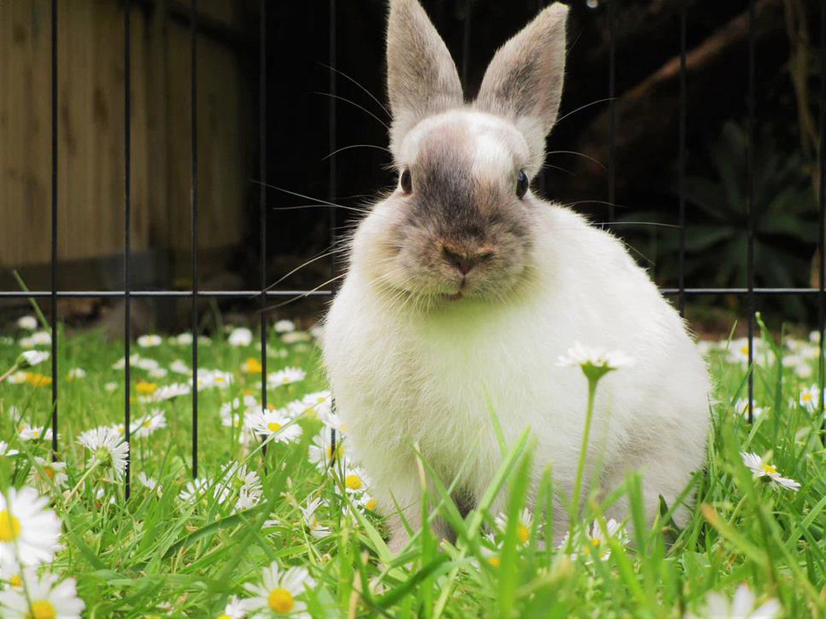 A Guide to Keeping and Caring for Rabbits