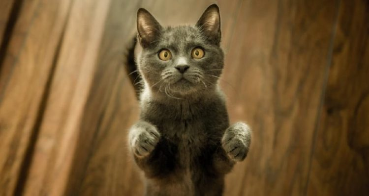 Urine Marking in Cats: Why Does it Happen & How to Stop it