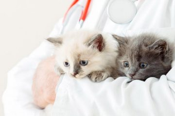 5 Benefits of Bringing Your Cat to an Accredited Cat-Friendly Clinic