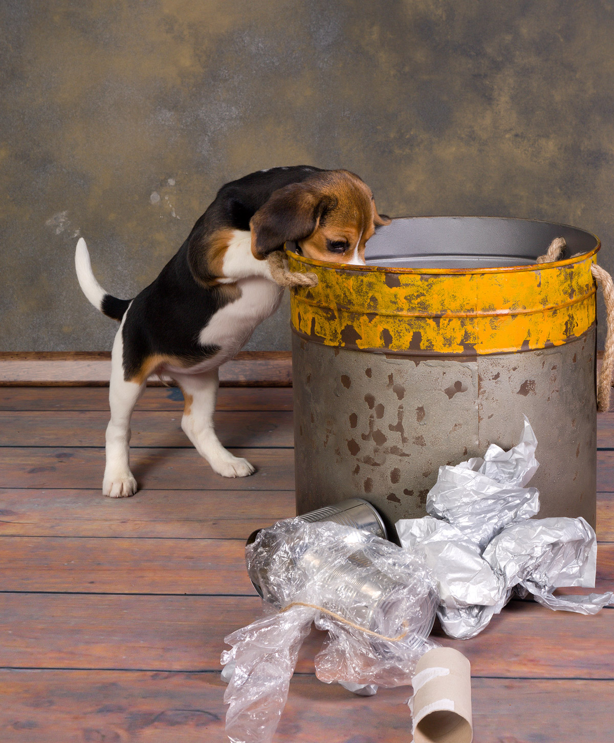 5 Scary Truths Behind Your Dog's Bad Breath