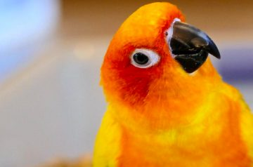 Bird Talk: How to Teach Your Pet Bird to Speak