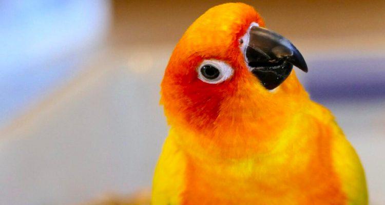 Bird Talk: How to Teach Your Pet Bird to Speak