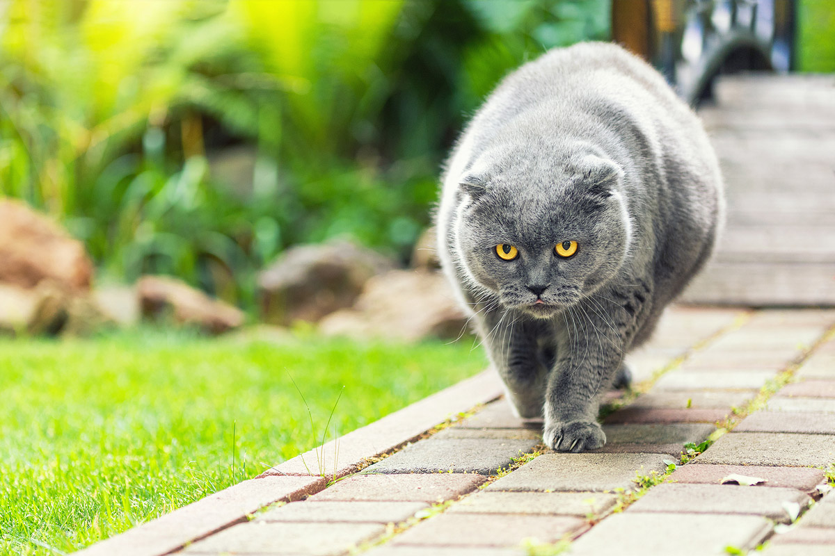 Is Your Pet Overweight? Causes of Weight Gain & Health Risks of Pet Obesity