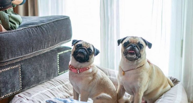 Need a Breather from Home During COVID-19? Try a Pet Staycation in Singapore!