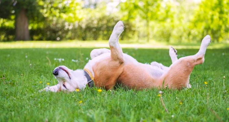 4 Precautionary Measures to Protect Your Pet From Tick-borne Diseases