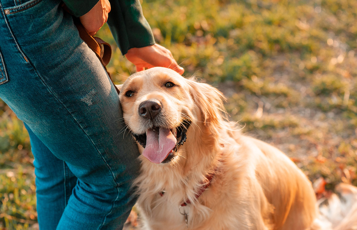 5 Ways Pets Keep Owners Happier & Healthier Than Ever