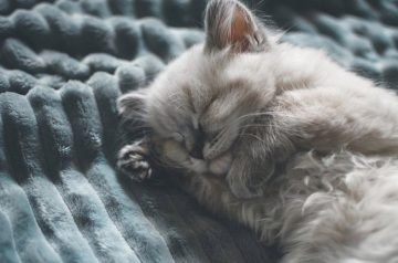 Old Age in Cats: What It Really Means & Care Tips