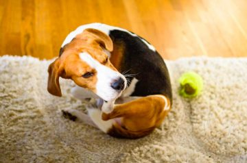 Are You Causing Your Pet Skin Problems?