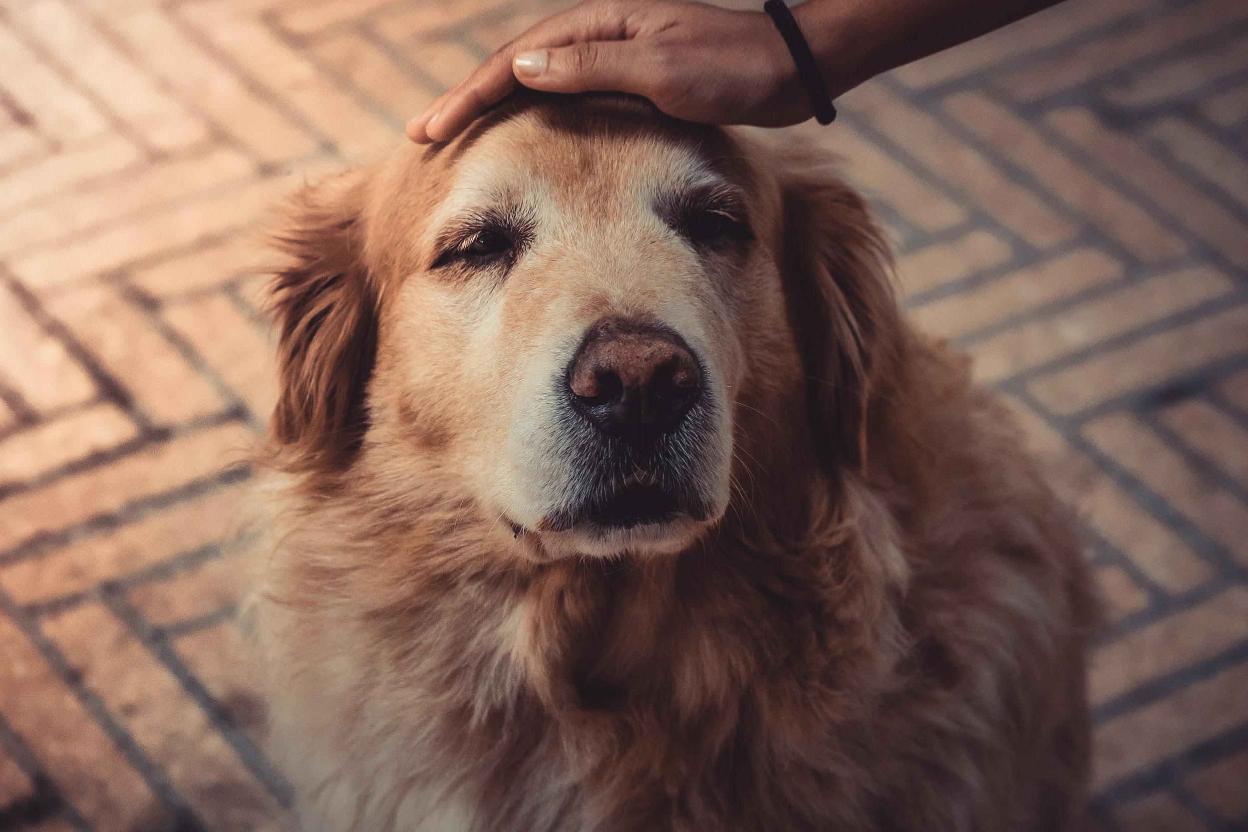 healthy lifestyle, vegan diet for dogs, vegan food for dogs