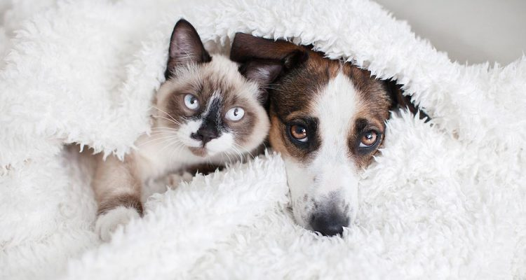 How Should You Care for an Elderly Dog & Cat?