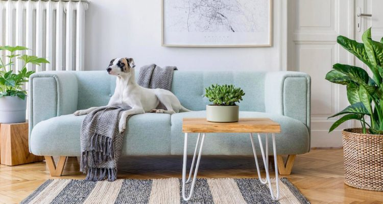 Pet Safety: Are Houseplants Good to Have in the Household?