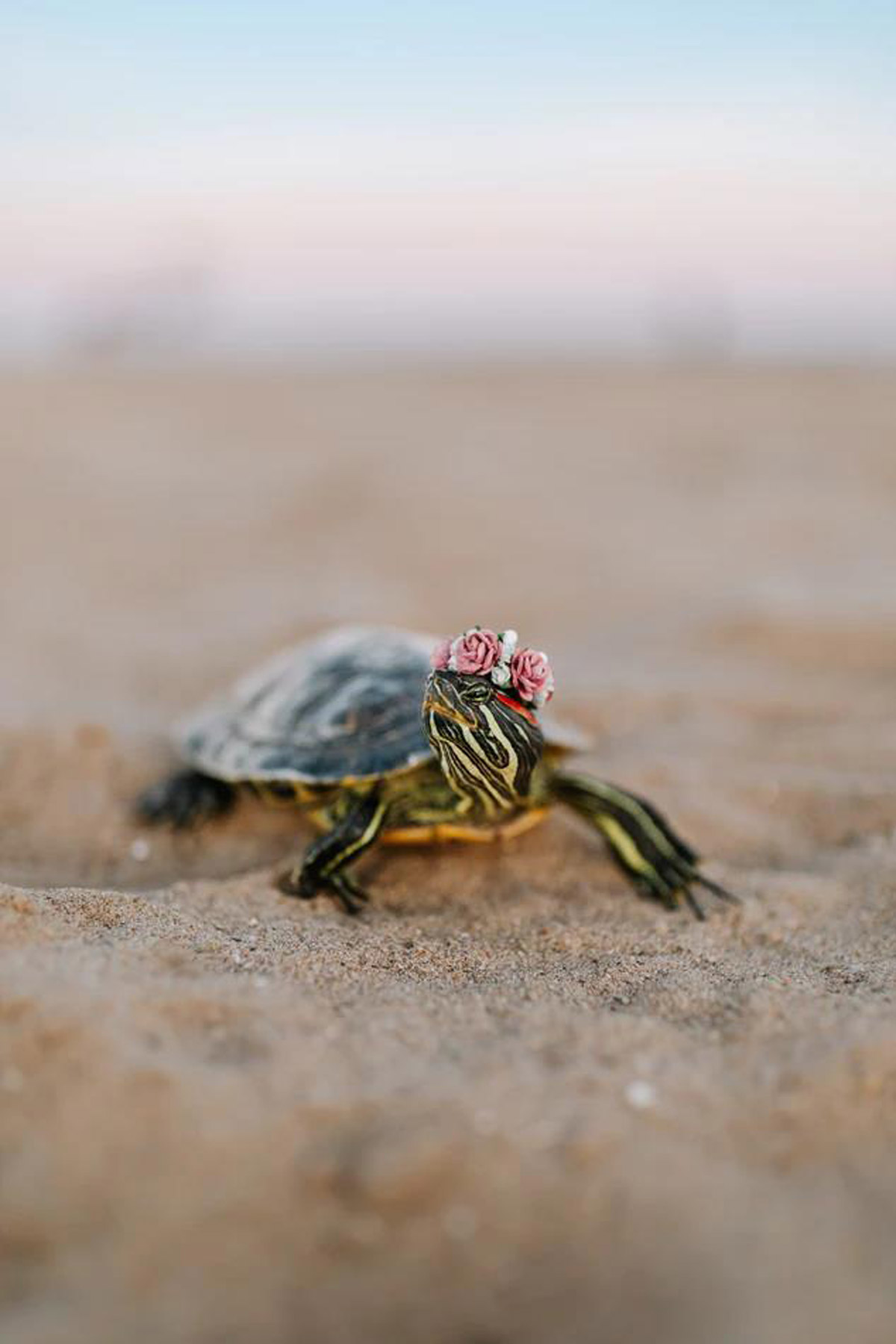Planning to Get A Turtle? Here's What You Should Know!
