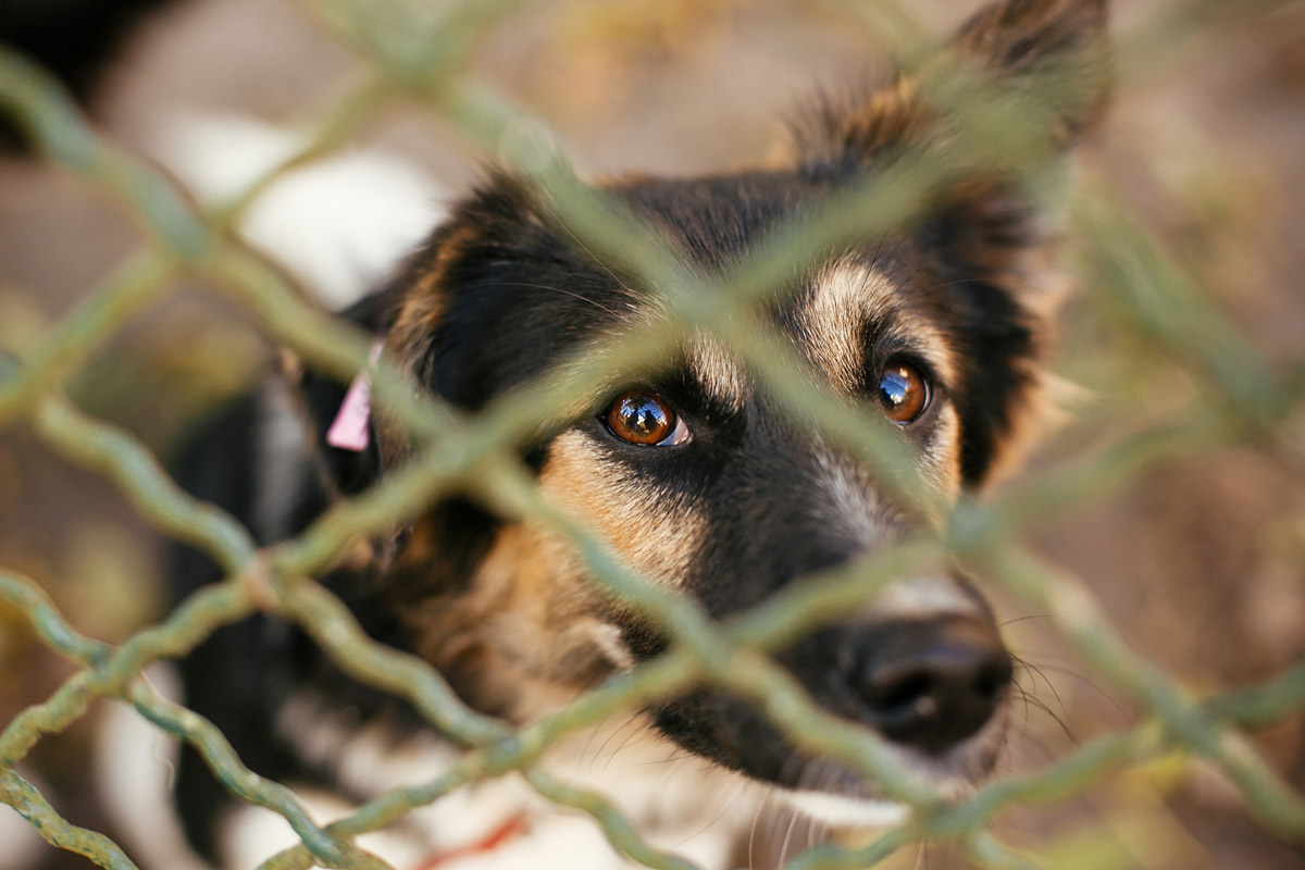 5 Surprising Mental Disorders Your Pet Might Suffer From
