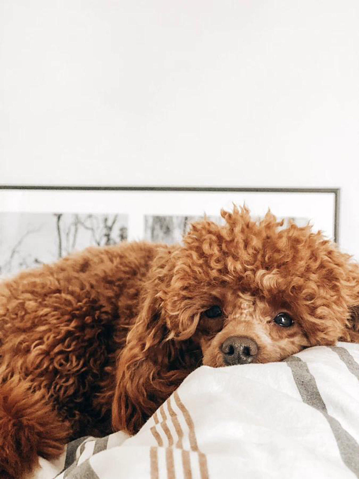 7 Dog Breeds Best for Families with Kids