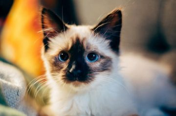 Common Health Issues in Cats According to Life Stages