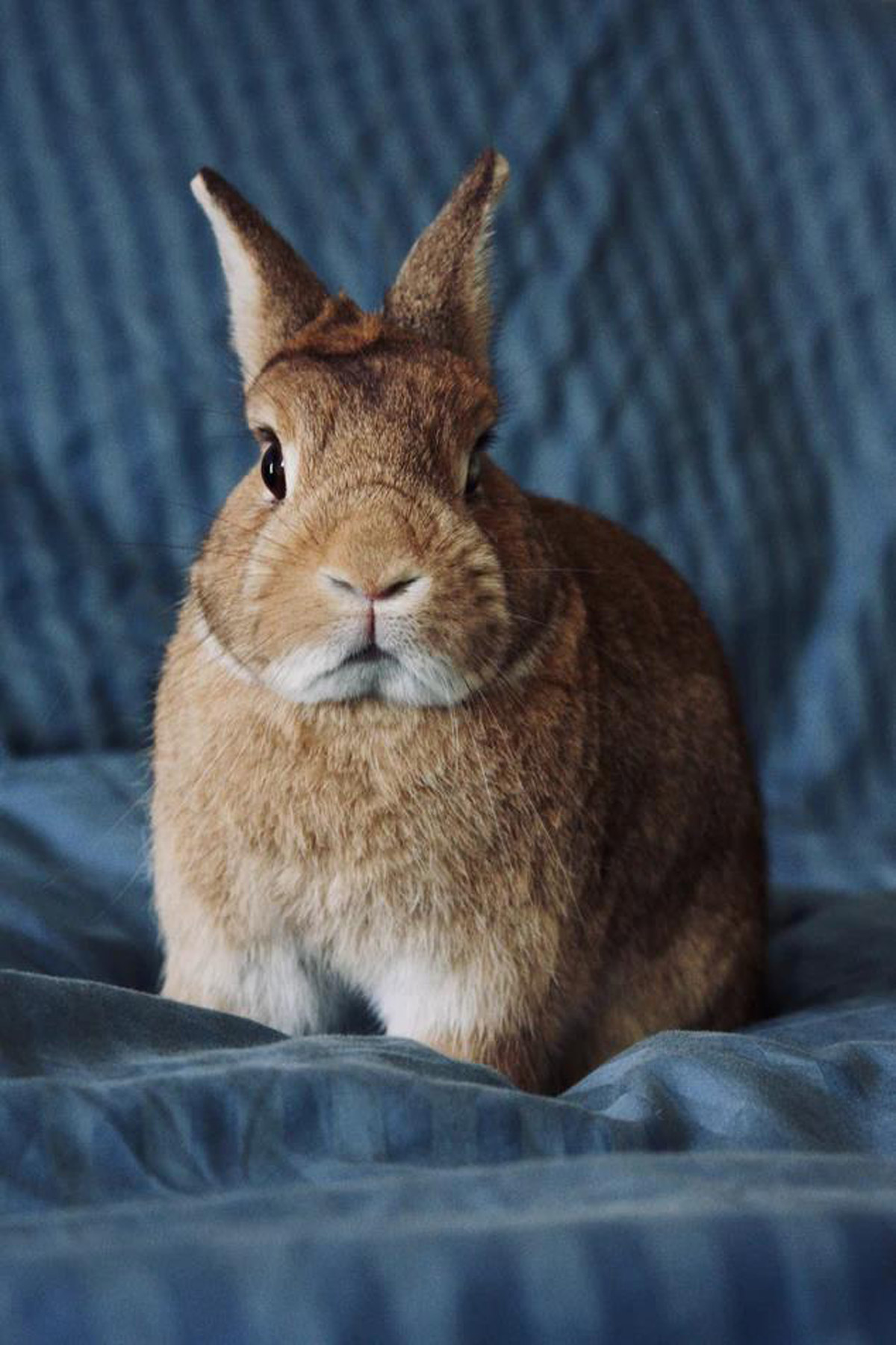 Are You Ready for a Pet Rabbit?