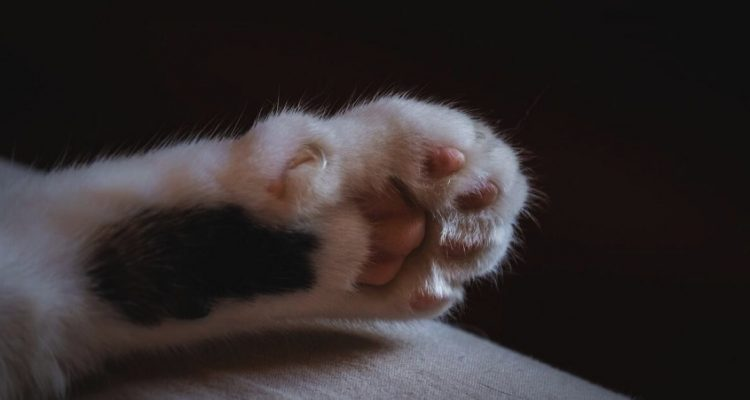 Claws Out: Why Do Cats Scratch Everything & Can You Stop It?