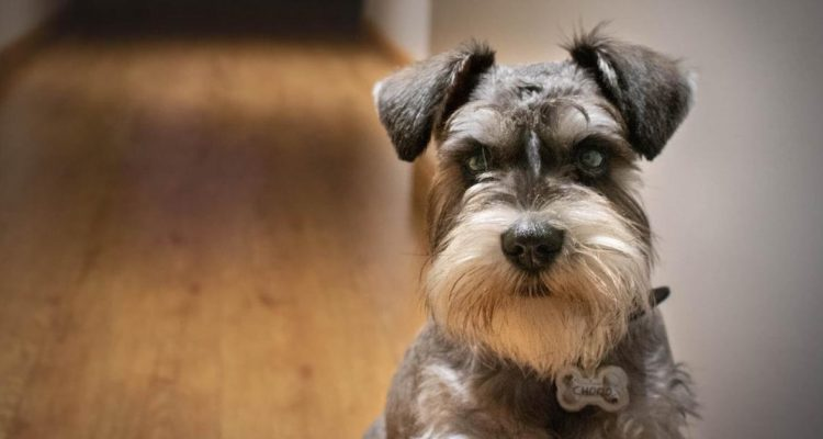 Should You Be Worried If Your Dog Doesn't Bark?