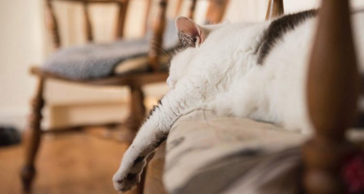The Dangers of Obesity in Cats: Why Chubby is Never Cute