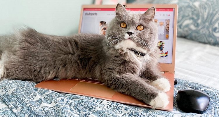 3 Reasons Why You Need to Start Shopping for Pet Supplies ASAP on Clubpets' E-Store!